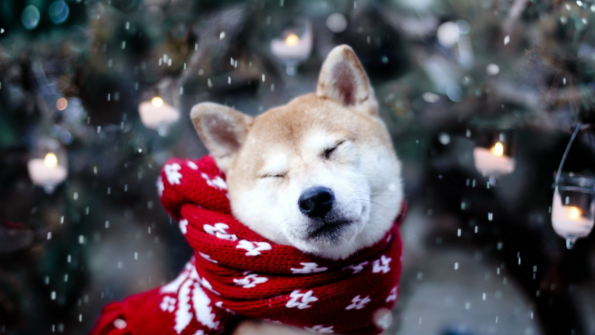 cute dog in the winter snow wearing a red hoodie