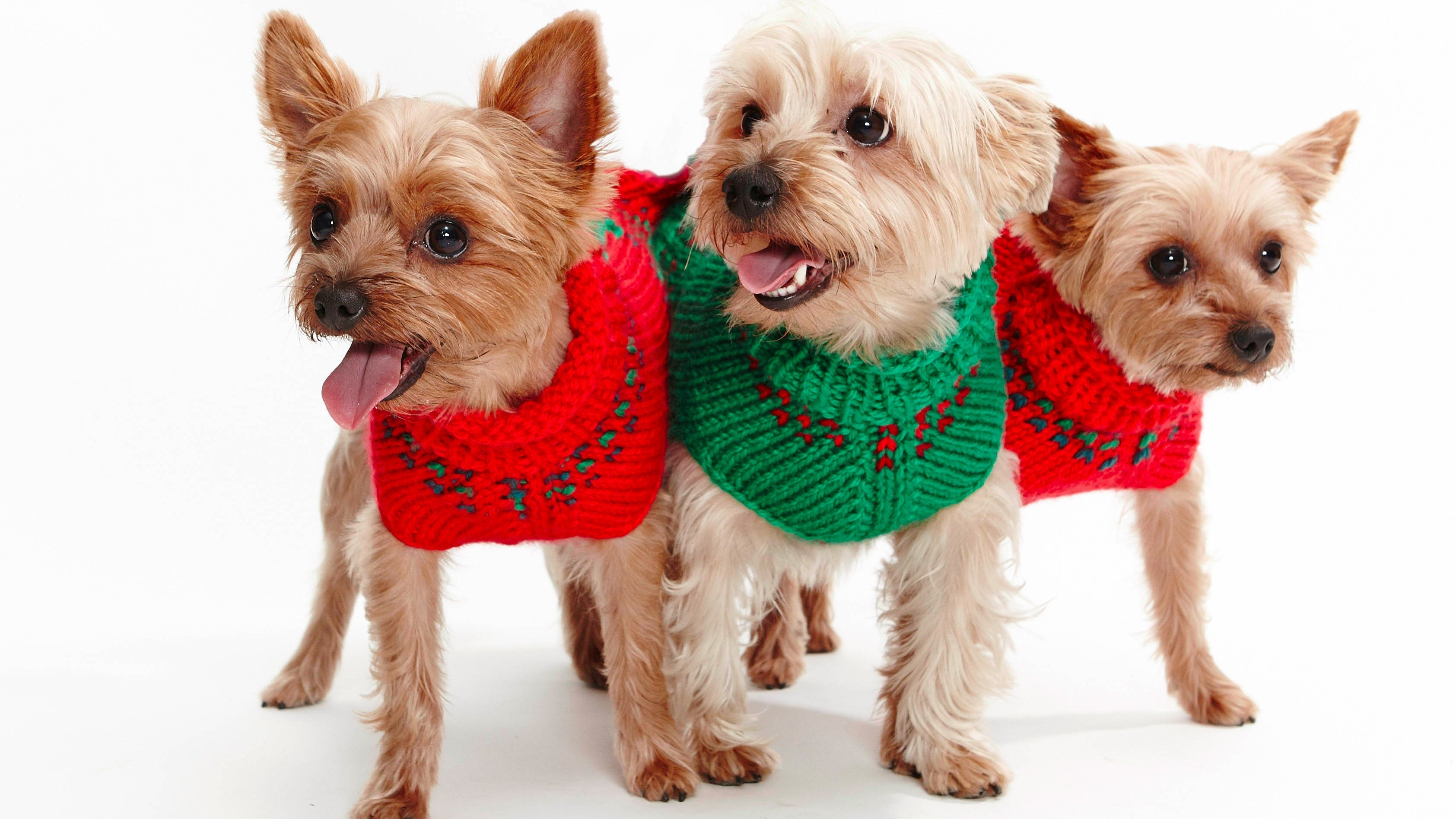 cute dogs wearing christmas jumpers