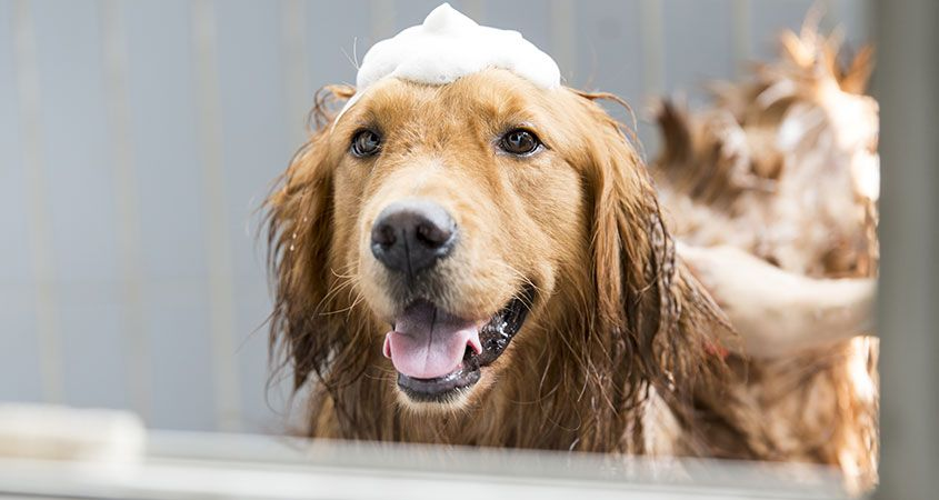 dog in bath with bubbles on head