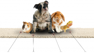 pet-friendly rug with a dog, rabbit, lizard and guinea pig lay on it