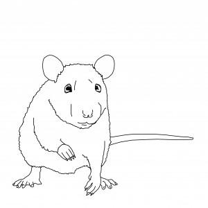 Illustration Rat