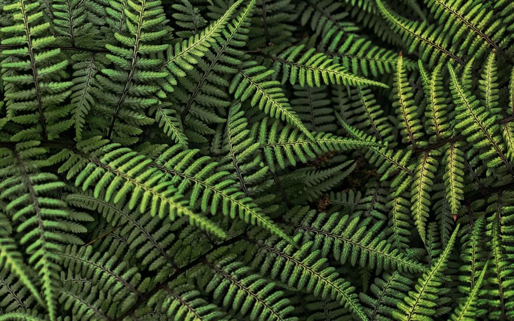 Fern plant the RHS Chelsea flower show