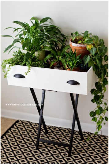 black and white upcycled dresser drawer holding potted indoor plants on a black and white patterned floor
