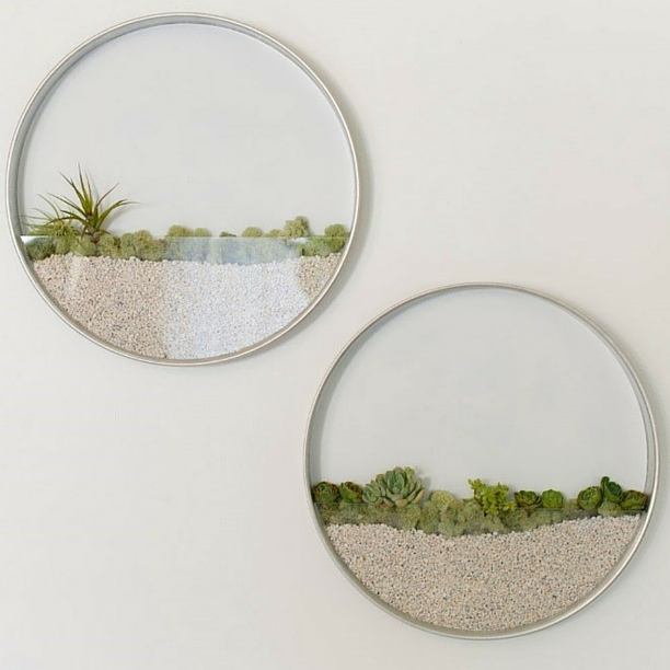 metal rimmed terrariums with air plants and white gravel on a white wall
