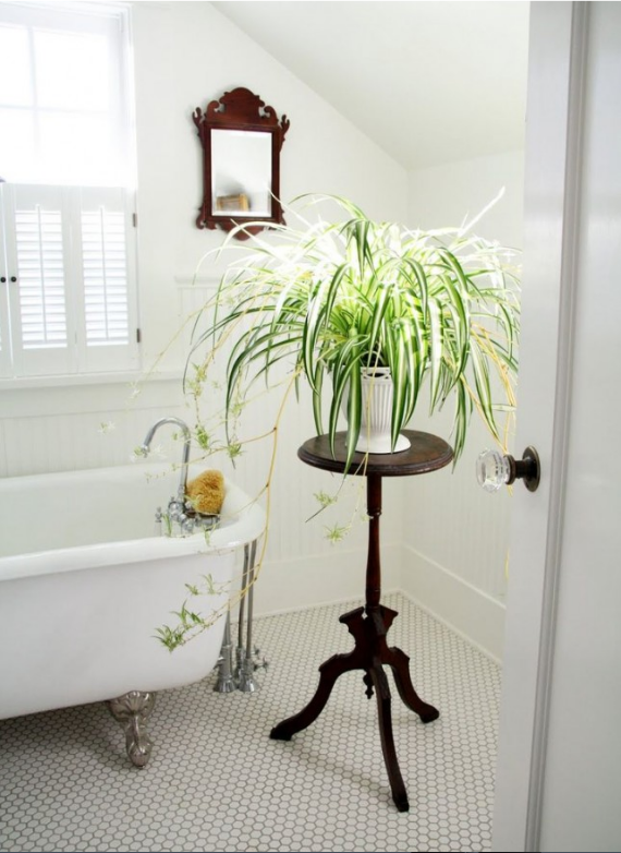 spider plant on wooden stand in a white bathroom