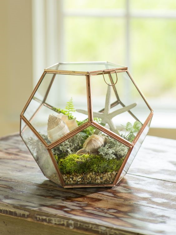 A bronze indoor plants terrarium placed on a wooden table with golden clubmoss and succulents inside