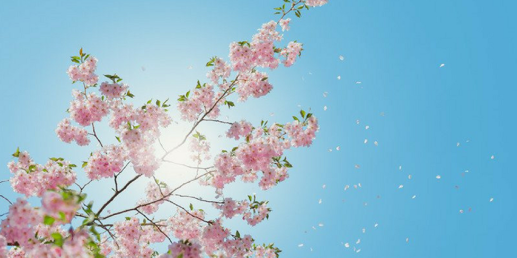 chelsea flower show 2017 banner image