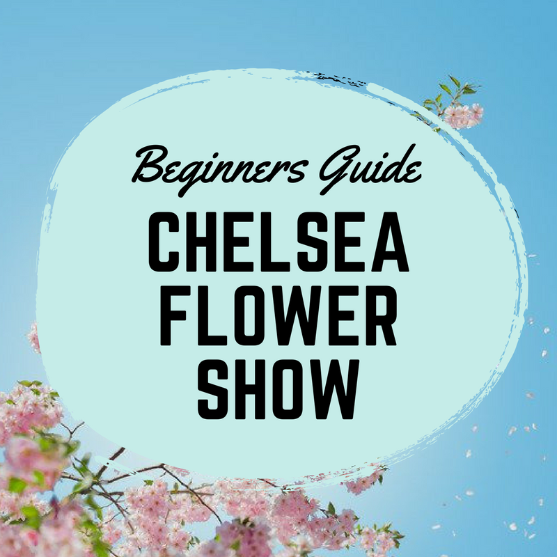 Chelsea flower show beginners guide featured image