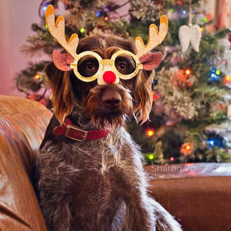 christmas dog with antlers