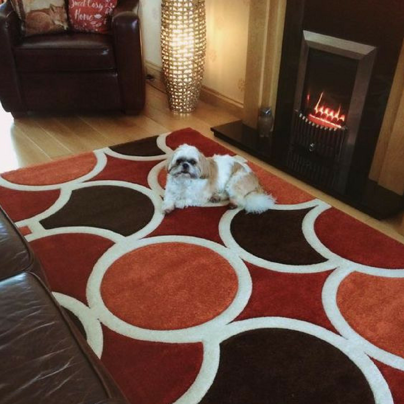 cute dog on an orange rug from the rug seller