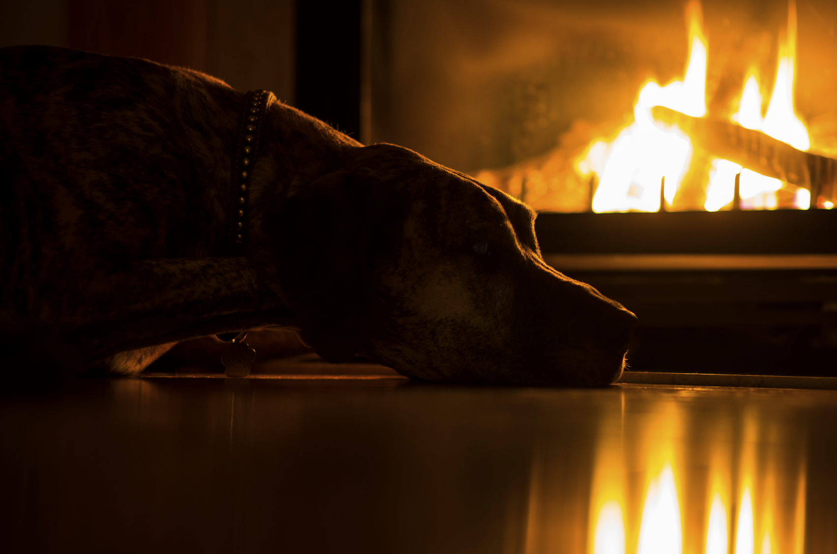 dog next to a fireplaces
