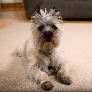 cute dog on a pet-friendly seagrass rug