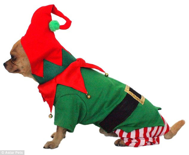 dog in an elf costume