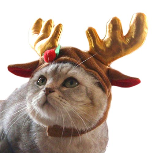 cat wearing antlers