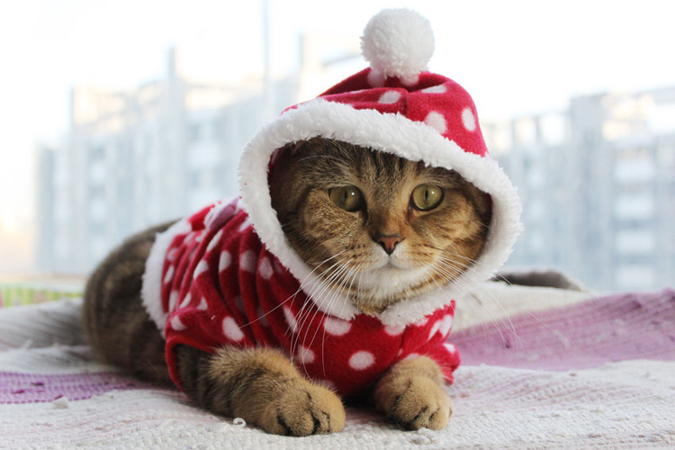 A Festive How To: Get Your Pet Ready For Christmas
