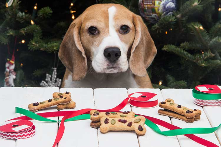 dog with christmas treats