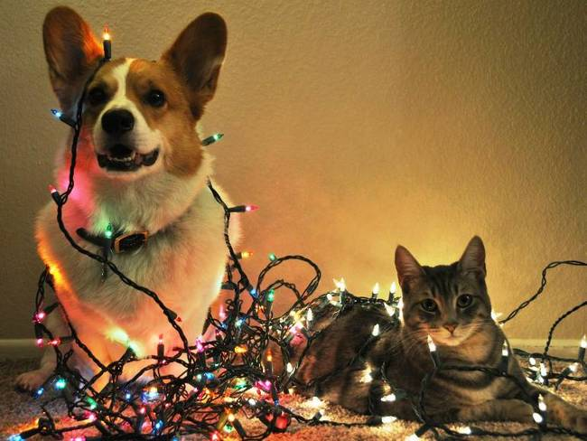 pets in xmas lights