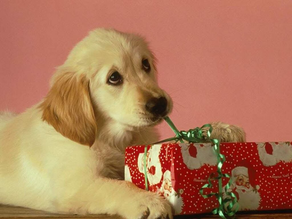 dog opening a present