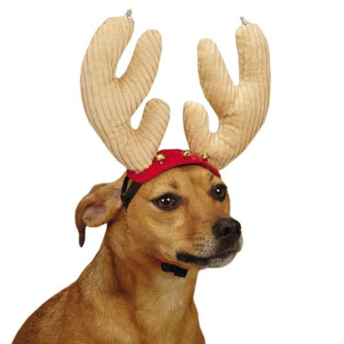 dog with christmas antlers