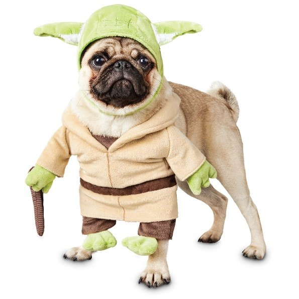 Star Wars May the 4th be with you pug dog dressed up as Yoda