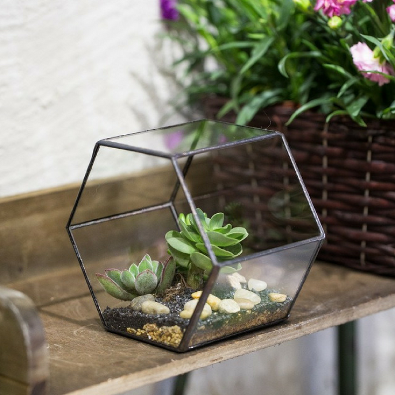 Geometric Patterns Glass Planters Terrariums