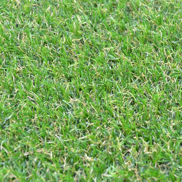 Camellia Artificial Grass by Easy Lawn